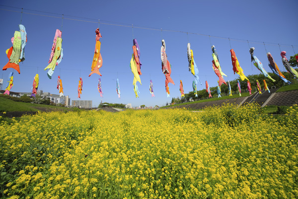 koinobori, children's day in Japan
