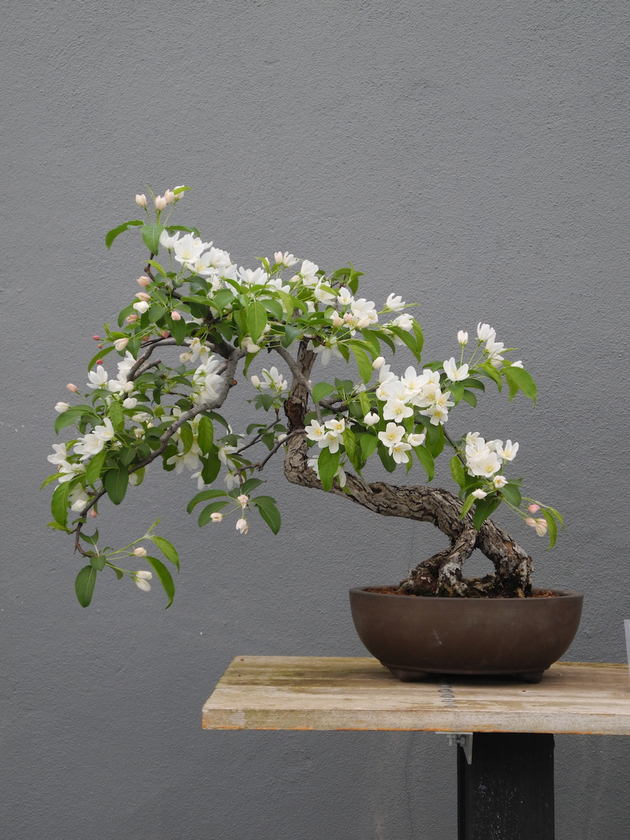 Bonsai Class Resobox